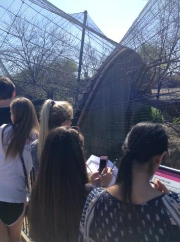 Seniors take trip to the zoo, freshmen give back to the community