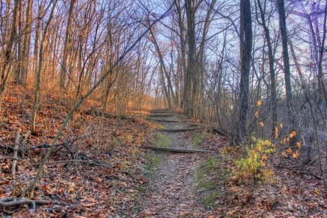 Babler State Park is one of many in the area that offers trails to hike that  vary in distance and length.