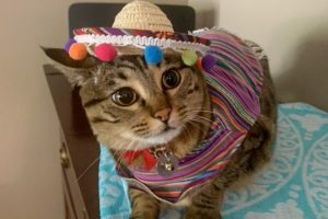 Bob wears the latest in her costume ensemble, an outfit with a poncho and a sombrero.